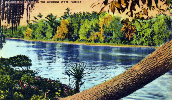 Postcard - A River Scene in the Sunshine State